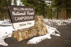 Muestra Oreg del camping de Wallowa Whitman National Forest Yellow Pine imagenes de archivo