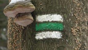 Muestra turística checa en corteza de árbol Setas en el tronco de un árbol almacen de video