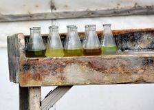 Muestras de especies múltiples de las algas en los cubiletes de cristal Foto de archivo libre de regalías