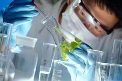 Muestras de examen del científico con las plantas foto de archivo libre de regalías