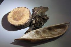Muestras de material vegetal para el examen imagenes de archivo