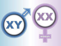 Muestras del cromosoma de sexo Fotografía de archivo