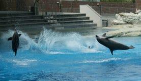 Muestre con los delfínes Imagen de archivo libre de regalías