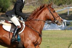 Muestre el caballo y al jinete Fotografía de archivo libre de regalías