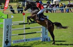 Muestre el caballo y al jinete de salto Fotos de archivo