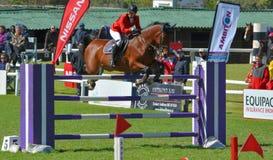 Muestre el caballo y al jinete de salto Imagenes de archivo