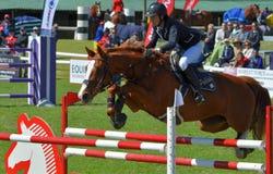 Muestre el caballo y al jinete de salto Imagen de archivo libre de regalías
