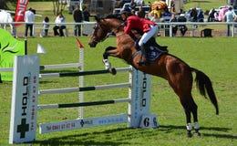Muestre el caballo y al jinete de salto Fotografía de archivo