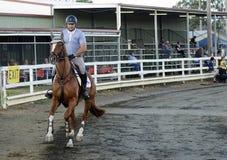 Muestre el caballo y al jinete que se preparan para la carrera de obstáculos Fotos de archivo