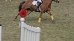 Muestre el salto con los caballos almacen de video