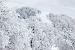 Muestre los árboles en las montañas Imágenes de archivo libres de regalías