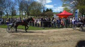 Muestre los trotones corrientes durante los caballos públicos del festival de la ciudad en el parque Kaivopuisto metrajes