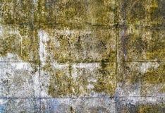 muffa Fotografie Stock Libere da Diritti