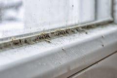 Muffa e sporcizia sulla finestra fotografia stock