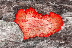 Muffa a forma di del cuore Fotografie Stock Libere da Diritti