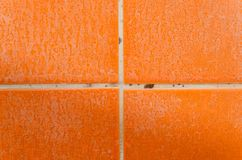 Muffa, fungo e limescale sulle mattonelle fotografia stock