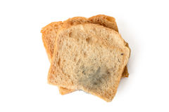 Muffa nera su un pane Immagine Stock