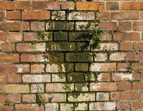 Muffa su una parete Fotografie Stock