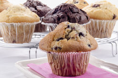 Muffin των βακκίνιων και σοκολάτας Στοκ Φωτογραφίες