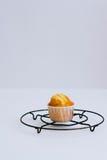 Muffin arancio su un supporto del metallo Fotografia Stock