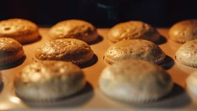 Muffin Baka i ugn Längd i fot räknat för Tid schackningsperiod av matlagningmuffin 4k UHD stock video