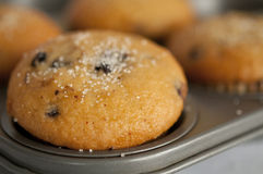Muffin in baking pan Stock Photo