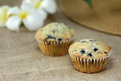 Muffin on burlap sackcloth homemade Royalty Free Stock Photo