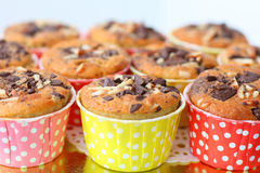 Muffin with choc-chip Stock Photography