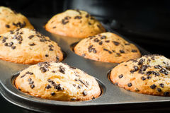 Muffin with chocolate chip in baking tray Royalty Free Stock Photo