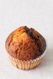 Muffin closeup. Closeup of a fresh and crisp muffin cake Royalty Free Stock Photography