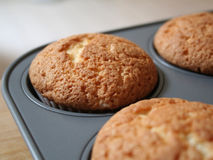Muffin cupcakes in pan. Muffin cupcakes freshly out of the oven Royalty Free Stock Image