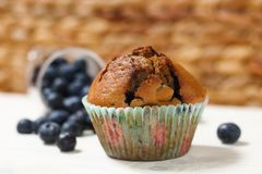 Muffin de blueberry Fotografia de Stock