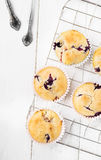 Muffin de blueberry Fotografia de Stock Royalty Free