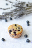 Muffin de blueberry Imagem de Stock Royalty Free