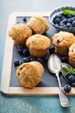 Muffin de blueberry em uma bandeja Foto de Stock Royalty Free