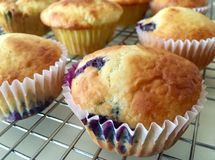muffin de blueberry Fresco-cozidos Imagem de Stock