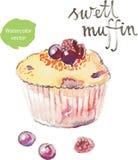 Muffin dell'acquerello Fotografie Stock Libere da Diritti