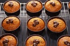 Muffin della zucca con cioccolato sullo scaffale per raffreddamento immagini stock