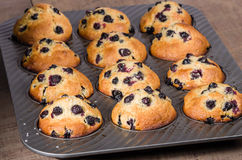Muffin pan with baked muffins Stock Photos