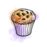 Muffin with raisins. Hand drawn vector illustration of muffin with raisins. Watercolor background. Isolated on white Stock Photo
