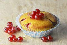 Muffin with red currants Stock Images