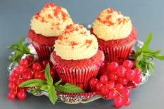 Muffin-Rot-Samt. Stockfoto