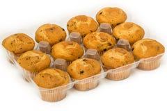 Muffin in un vassoio Fotografia Stock
