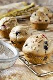 Muffiner med blåbär Arkivfoto