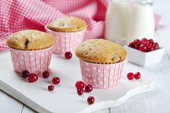 Muffiner med nya cranberries Arkivbilder