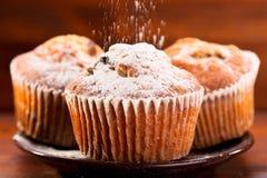 Muffiner med pudrat socker Arkivbild