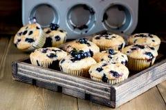 Muffinkleine kuchen mit Blaubeeren auf ein hölzernen Behälter kleinen Kuchen verziert mit horizontalem Foto der Beeren Stockfoto