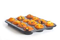 muffins βακκινίων δίσκος Στοκ Εικόνες