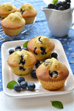 Muffins βακκινίων σε ένα άσπρο πιάτο Στοκ Εικόνα
