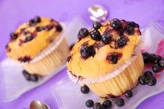 Muffins βακκινίων Στοκ Εικόνα